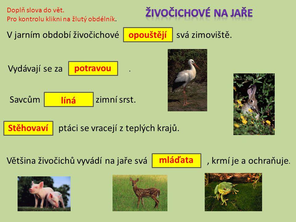 Živočichové na jaře V jarním období živočichové svá zimoviště.