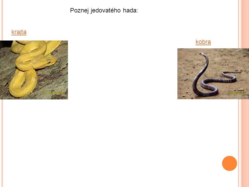 Poznej jedovatého hada: