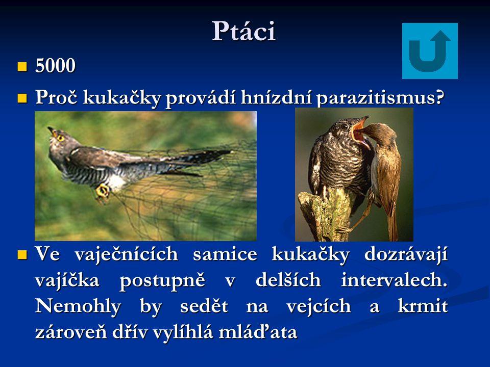 Ptáci 5000 Proč kukačky provádí hnízdní parazitismus