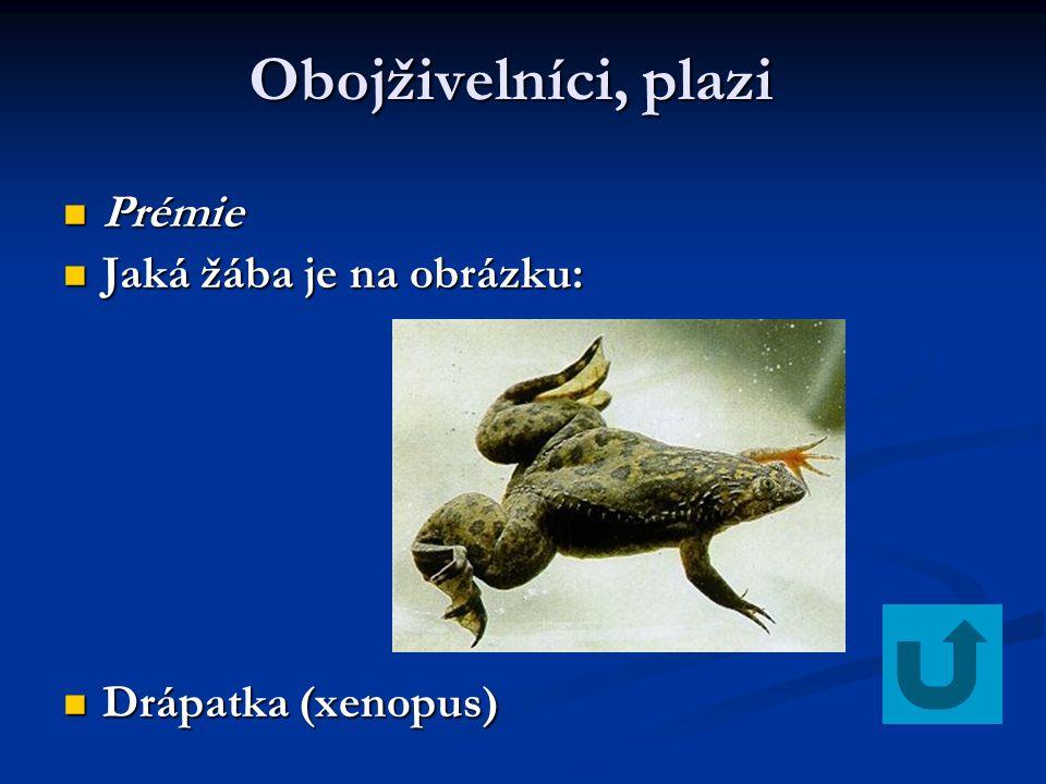 Obojživelníci, plazi Prémie Jaká žába je na obrázku: