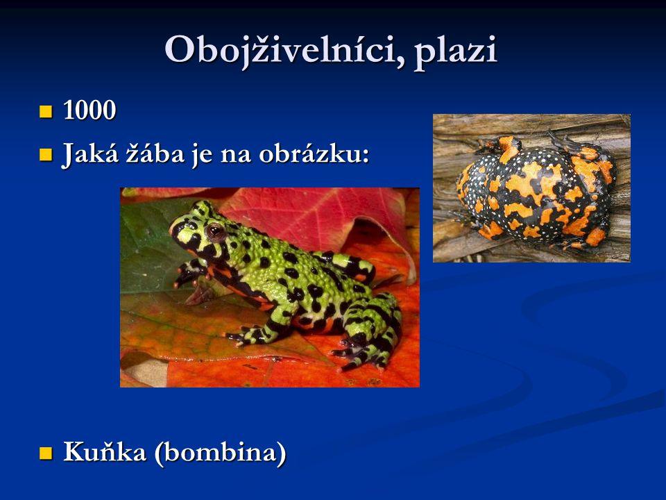 Obojživelníci, plazi 1000 Jaká žába je na obrázku: Kuňka (bombina)
