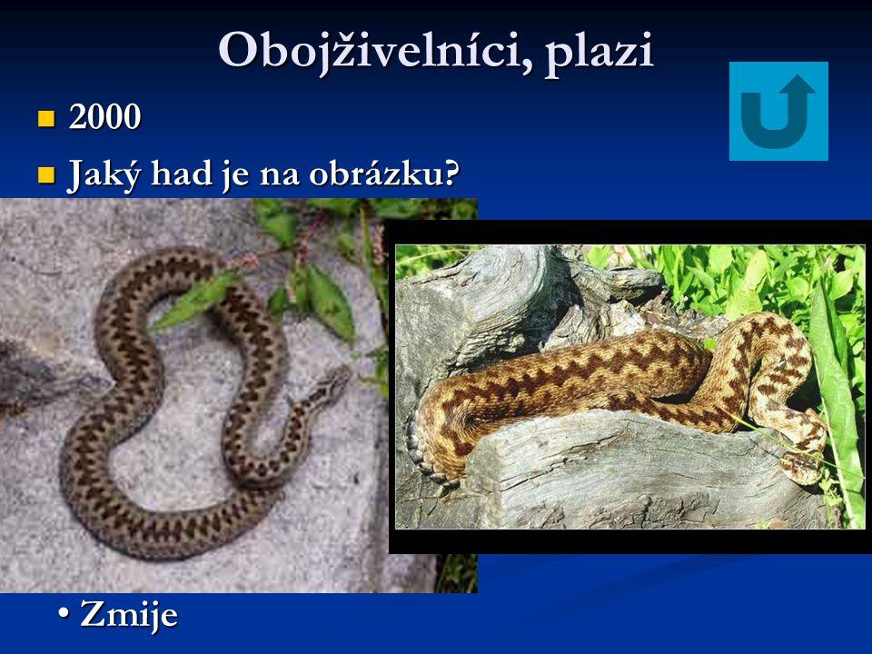 Obojživelníci, plazi 2000 Jaký had je na obrázku Zmije