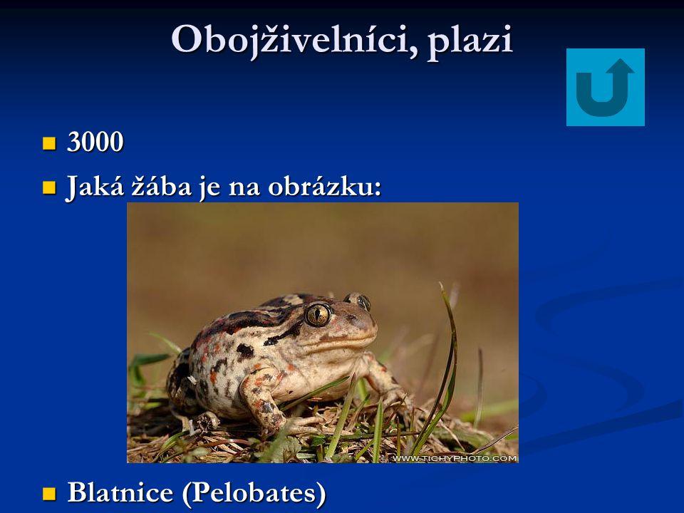 Obojživelníci, plazi 3000 Jaká žába je na obrázku:
