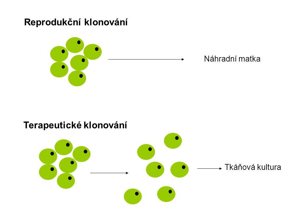 Reprodukční klonování