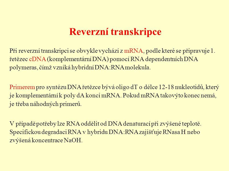Reverzní transkripce