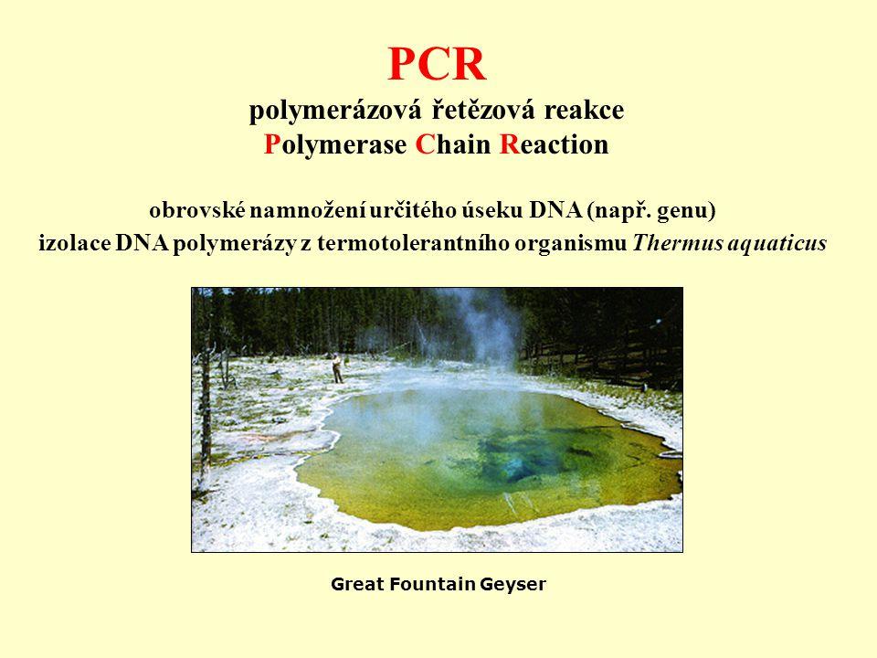 PCR polymerázová řetězová reakce Polymerase Chain Reaction