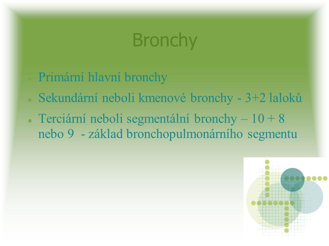 Bronchy Primární hlavní bronchy