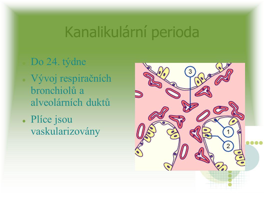 Kanalikulární perioda