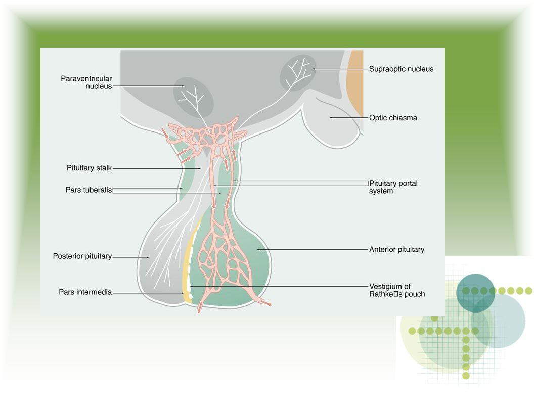 1,2 – 2,3 m2 Papily a epidermální lišty