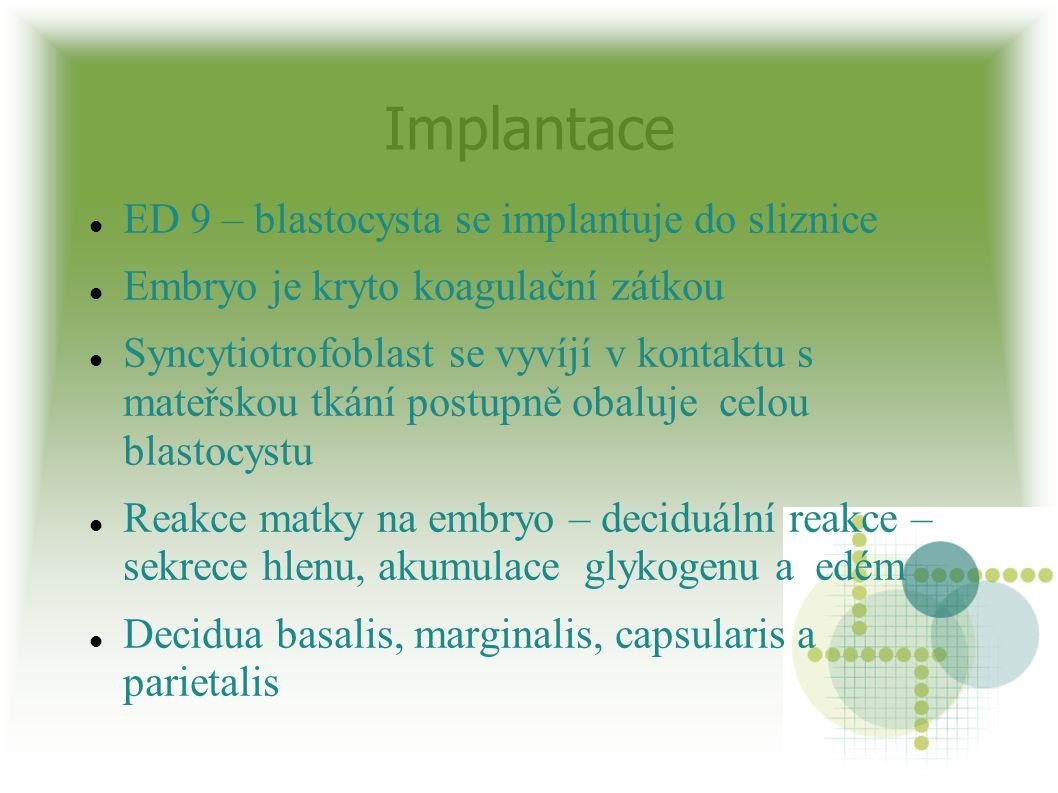 Implantace ED 9 – blastocysta se implantuje do sliznice