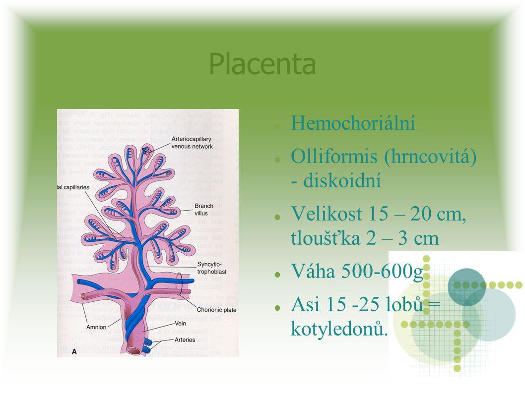 Placenta Hemochoriální Olliformis (hrncovitá) - diskoidní
