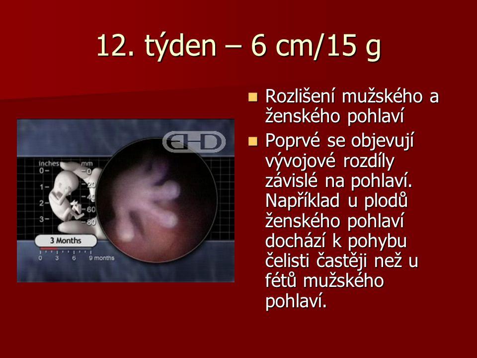 12. týden – 6 cm/15 g Rozlišení mužského a ženského pohlaví
