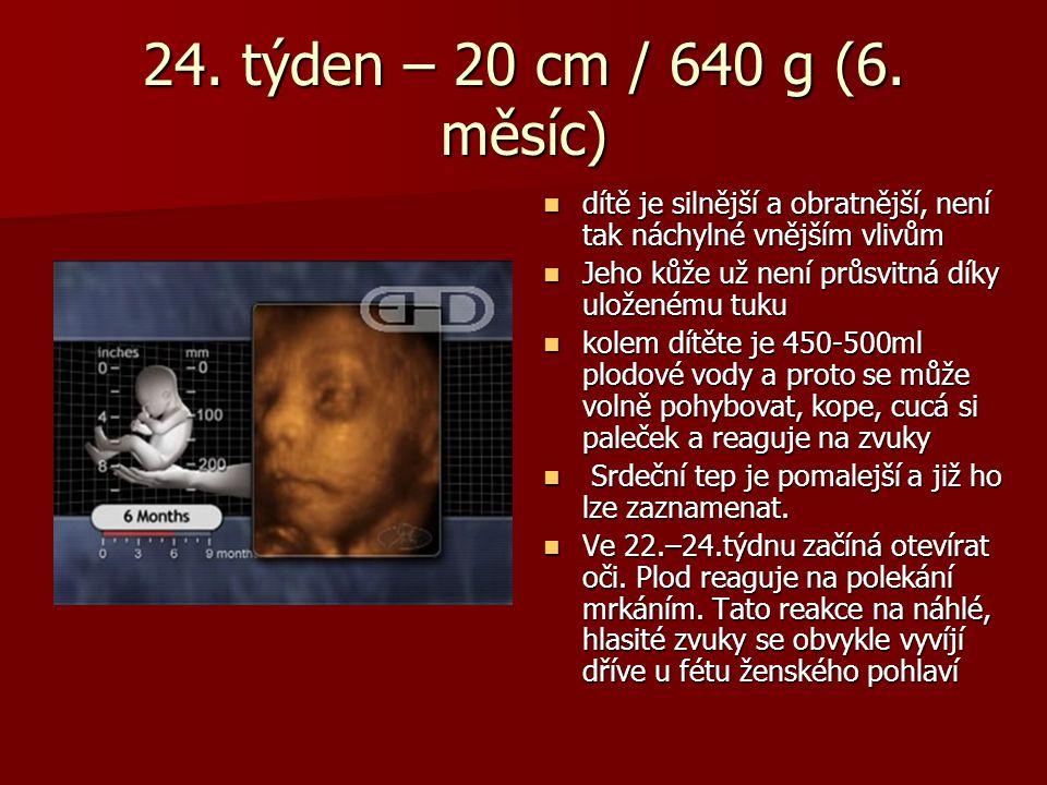 24. týden – 20 cm / 640 g (6. měsíc) dítě je silnější a obratnější, není tak náchylné vnějším vlivům.