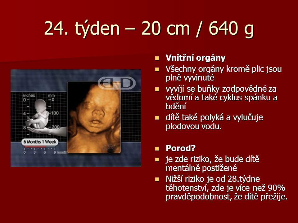 24. týden – 20 cm / 640 g Vnitřní orgány