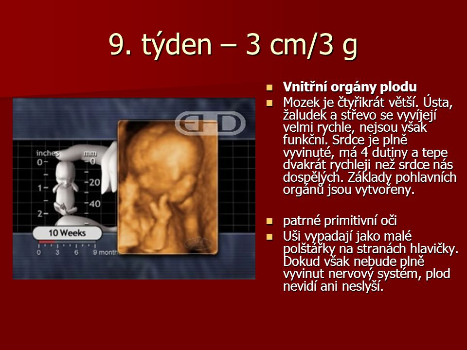 9. týden – 3 cm/3 g Vnitřní orgány plodu