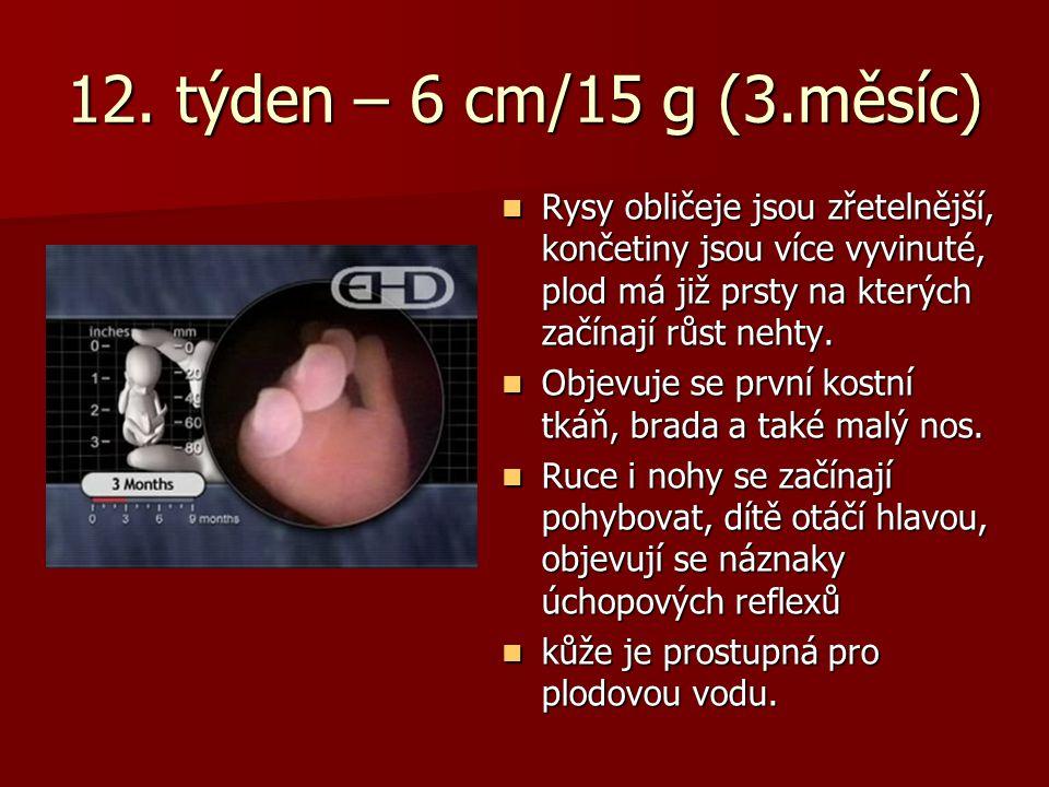 12. týden – 6 cm/15 g (3.měsíc) Rysy obličeje jsou zřetelnější, končetiny jsou více vyvinuté, plod má již prsty na kterých začínají růst nehty.
