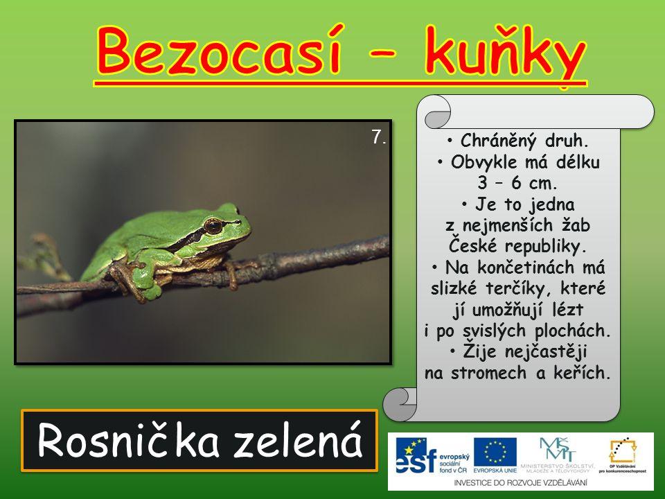 Bezocasí – kuňky Rosnička zelená 7. Chráněný druh.