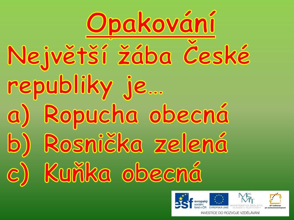 Opakování Největší žába České republiky je… Ropucha obecná