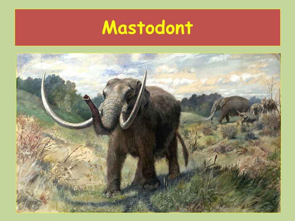 Mastodont