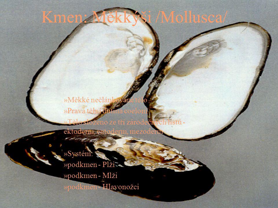 Kmen: Měkkýši /Mollusca/