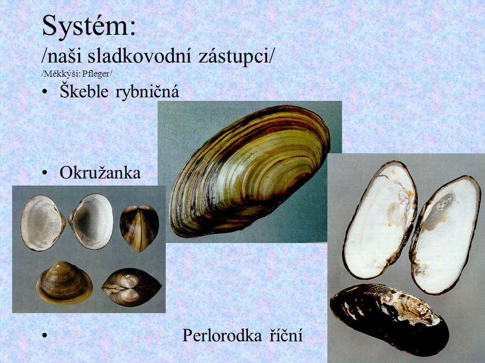 Systém: /naši sladkovodní zástupci/ /Měkkýši: Pfleger/