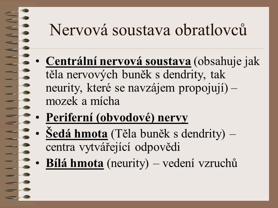 Nervová soustava obratlovců