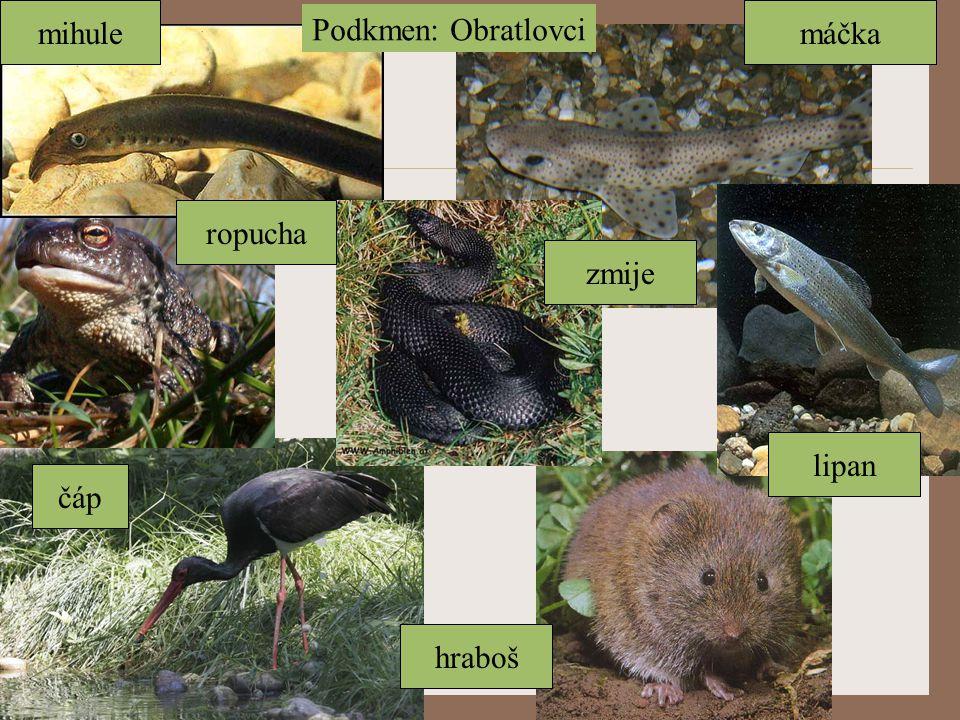 mihule Podkmen: Obratlovci máčka ropucha zmije lipan čáp hraboš