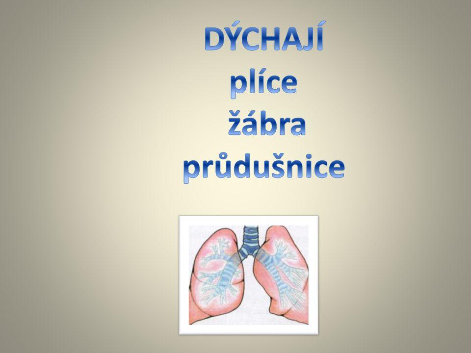 DÝCHAJÍ plíce žábra průdušnice