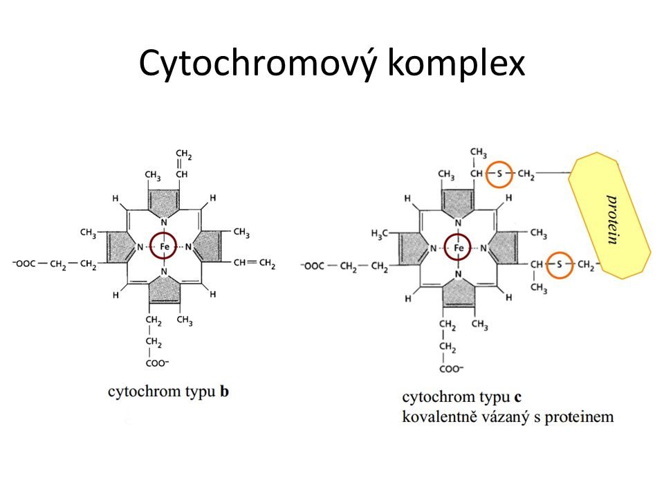 Cytochromový komplex