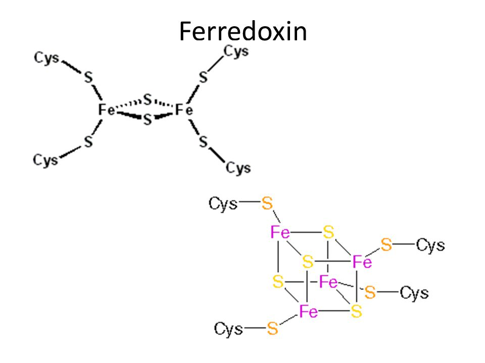 Ferredoxin