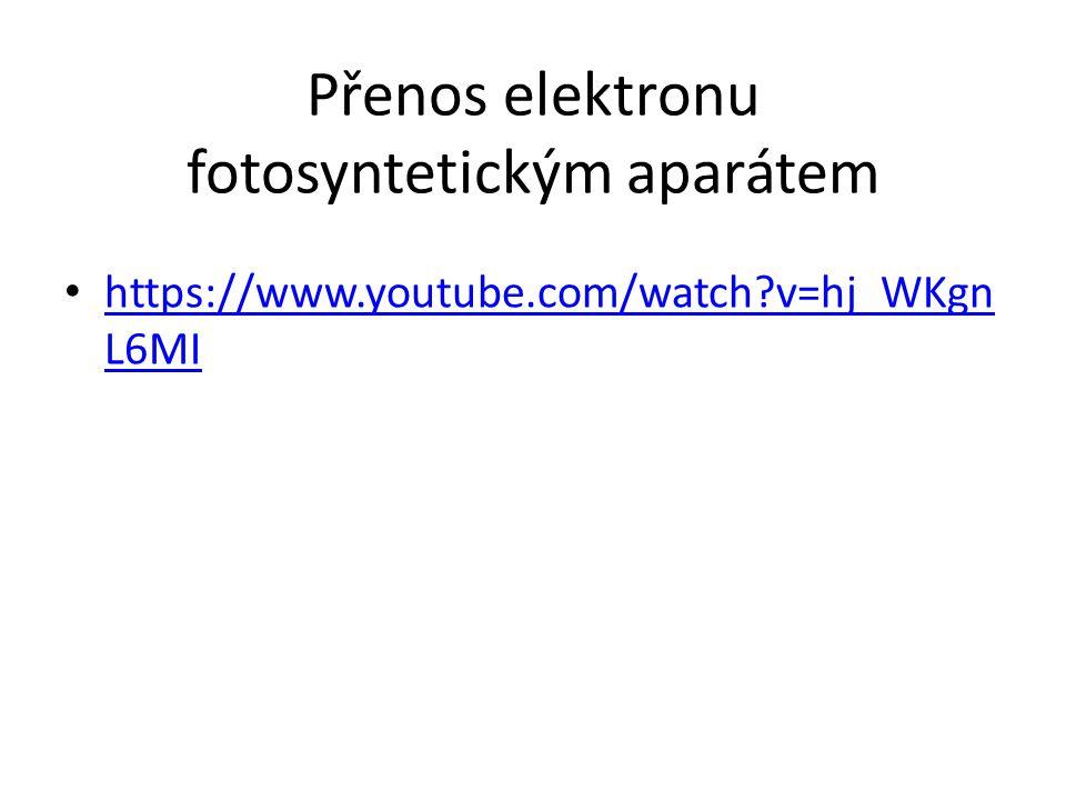 Přenos elektronu fotosyntetickým aparátem