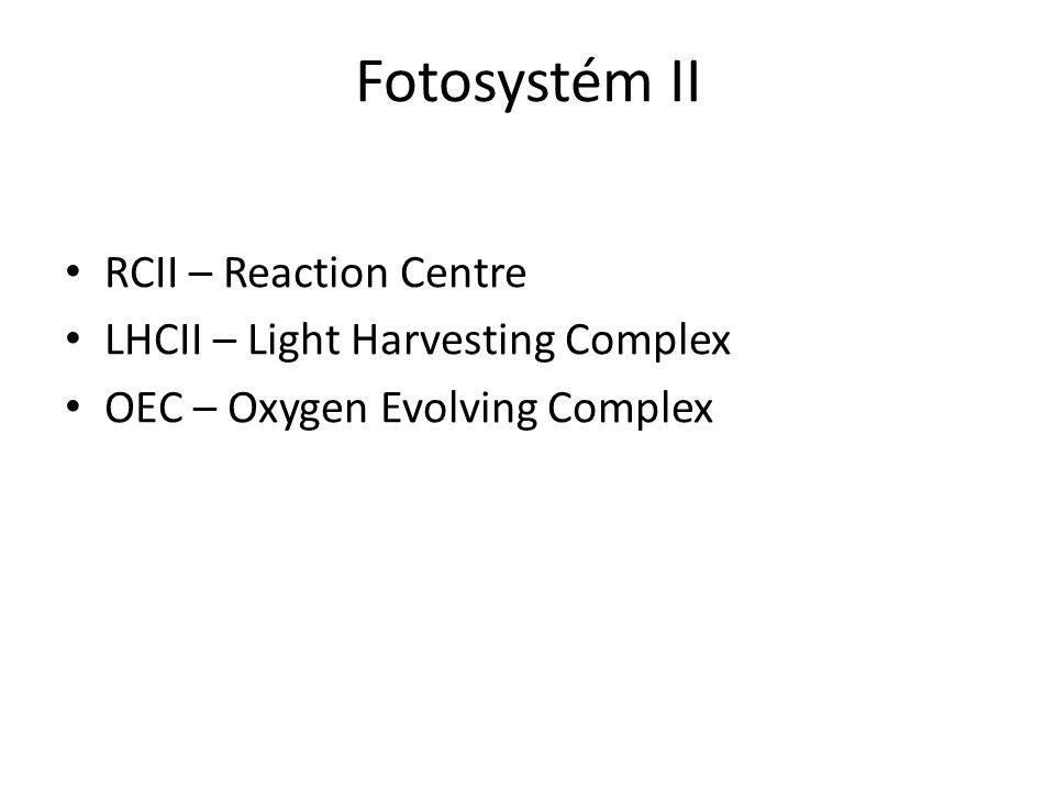 Fotosystém II RCII – Reaction Centre LHCII – Light Harvesting Complex