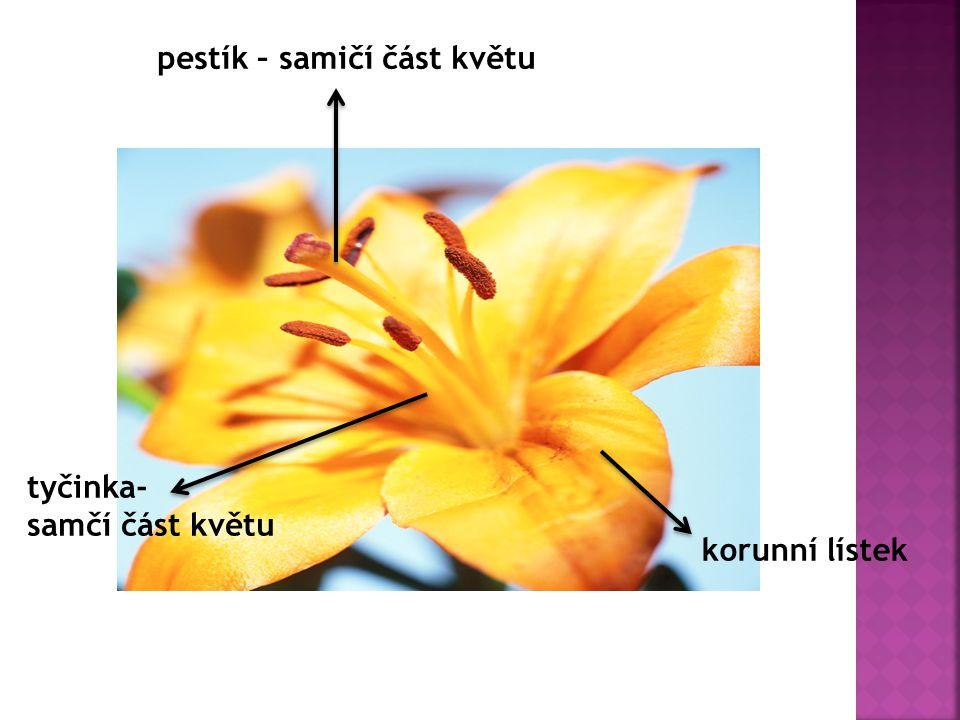 pestík – samičí část květu