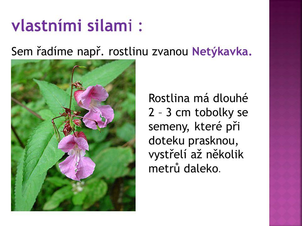 vlastními silami : Sem řadíme např. rostlinu zvanou Netýkavka.
