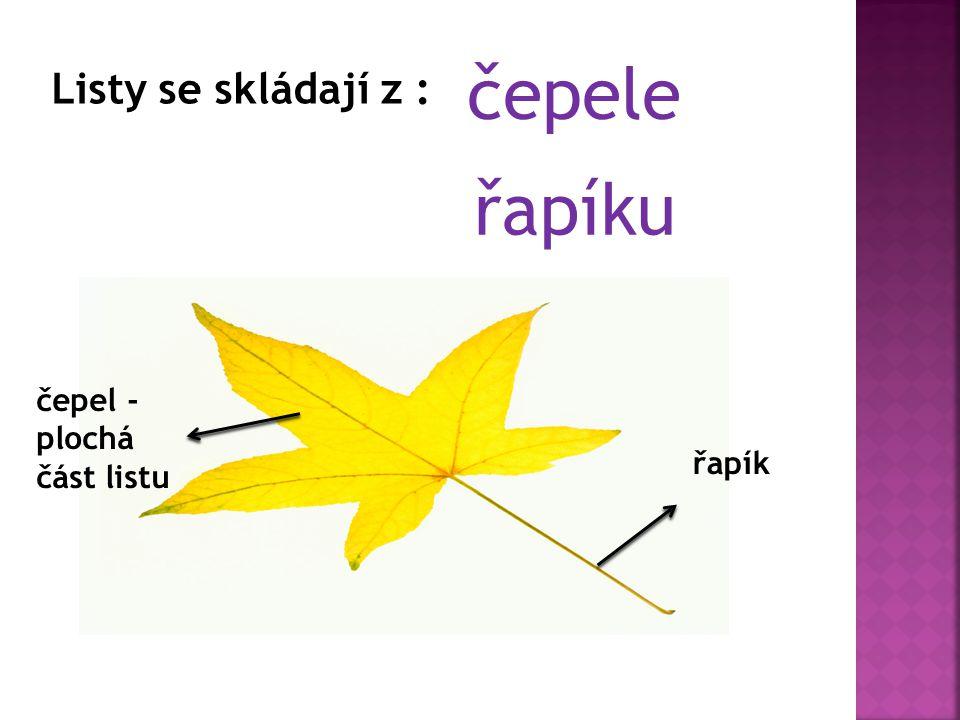 čepele Listy se skládají z : řapíku čepel - plochá část listu řapík