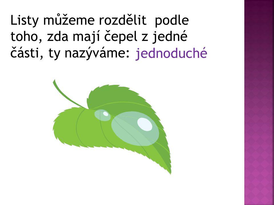 Listy můžeme rozdělit podle toho, zda mají čepel z jedné