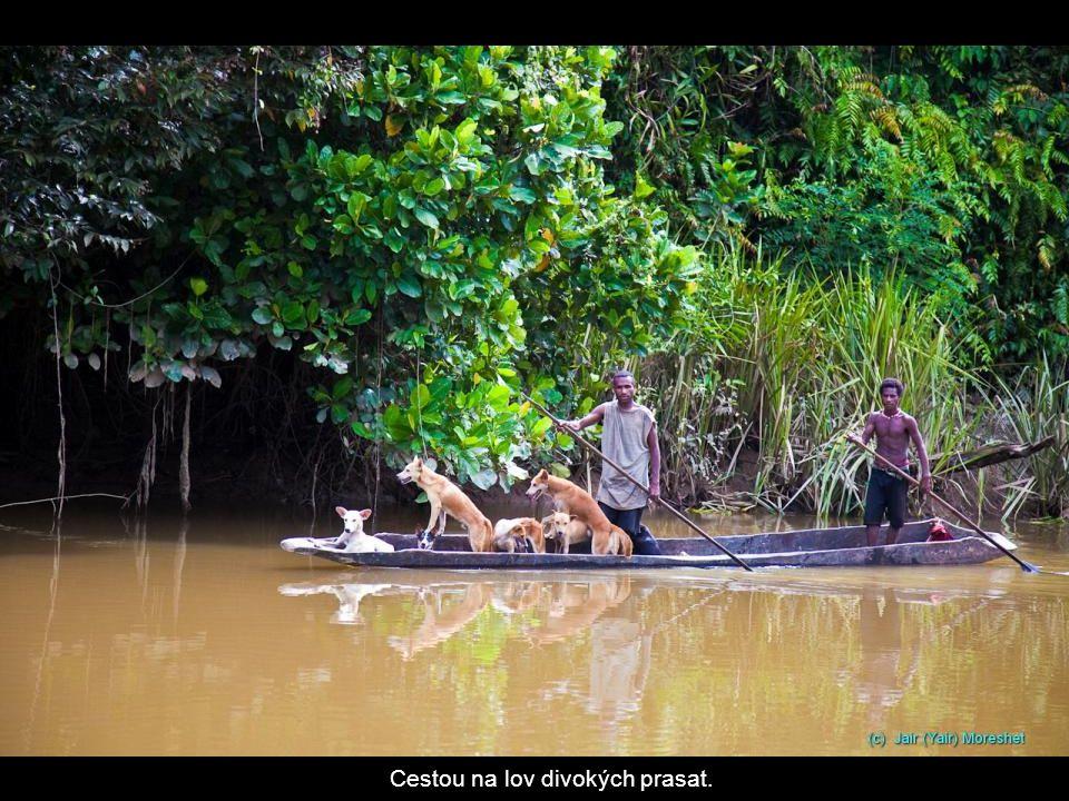 Cestou na lov divokých prasat.