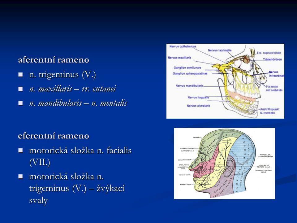 aferentní rameno n. trigeminus (V.) n. maxillaris – rr. cutanei. n. mandibularis – n. mentalis. eferentní rameno.