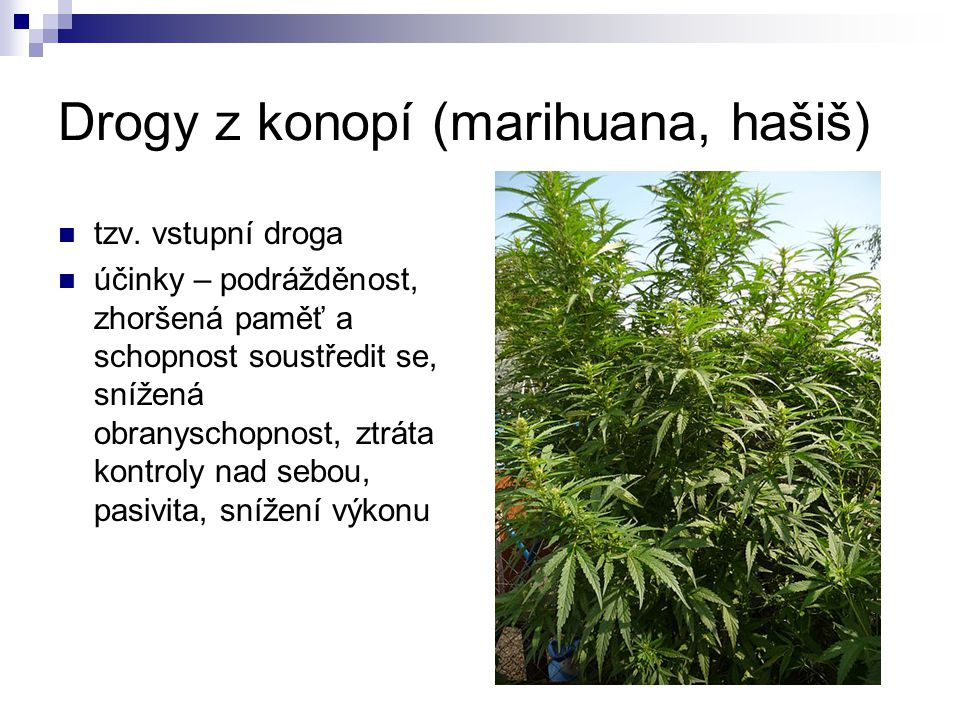 Drogy z konopí (marihuana, hašiš)
