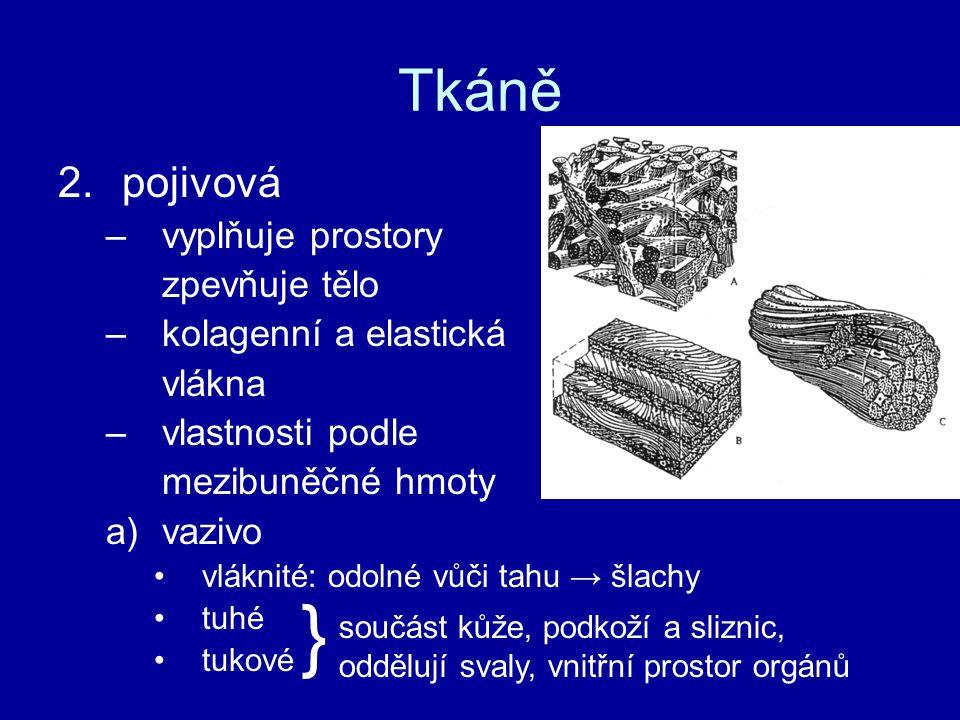 } Tkáně pojivová vyplňuje prostory zpevňuje tělo kolagenní a elastická