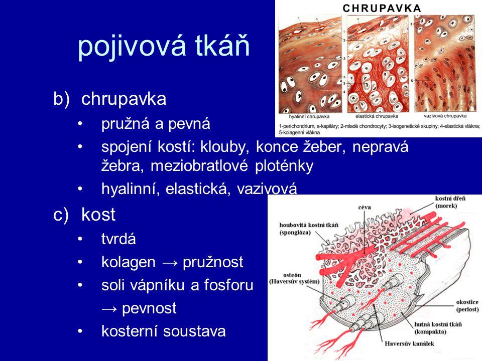 pojivová tkáň chrupavka kost pružná a pevná