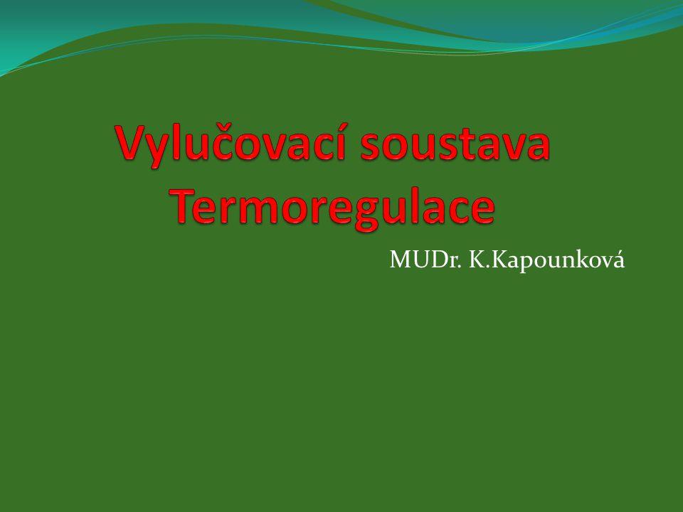 Vylučovací soustava Termoregulace