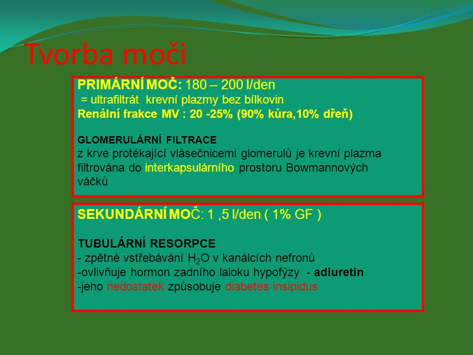 Tvorba moči PRIMÁRNÍ MOČ: 180 – 200 l/den