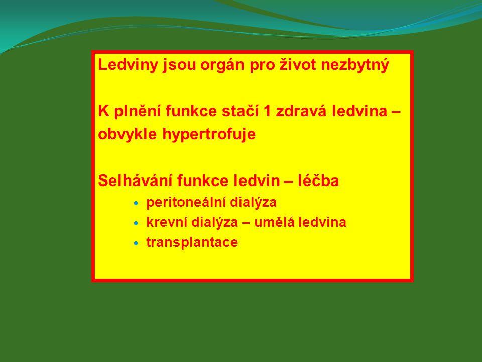 Ledviny jsou orgán pro život nezbytný