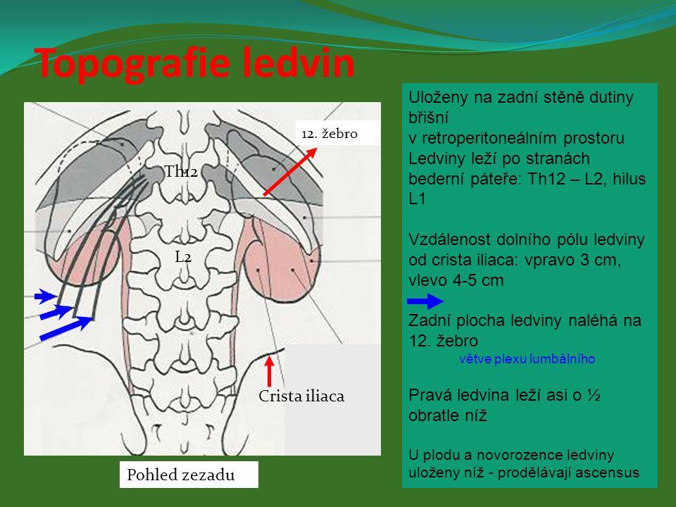 Topografie ledvin Uloženy na zadní stěně dutiny břišní