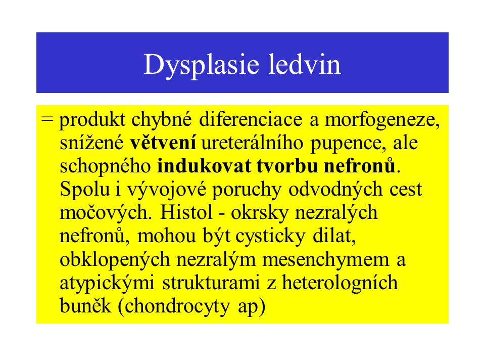 Dysplasie ledvin