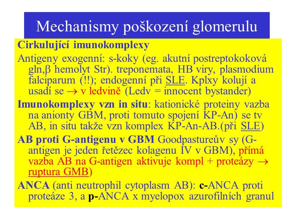 Mechanismy poškození glomerulu