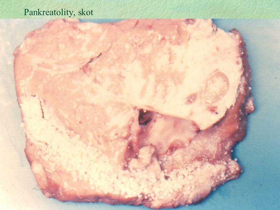 Pankreatolity, skot