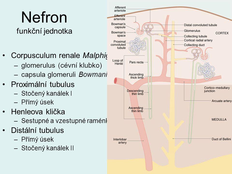 Nefron funkční jednotka