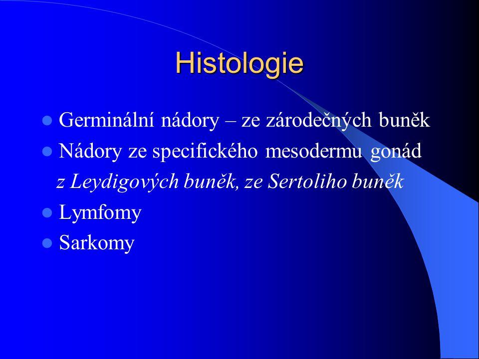 Histologie Germinální nádory – ze zárodečných buněk